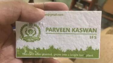 Cartão de visita feito de papel e sementes orgânicas pode ser plantado