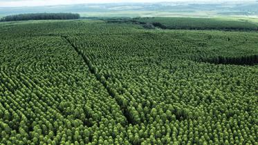 Árvores e Papel: uma relação de amor e cuidado