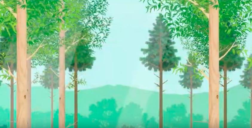 Dia de Proteção às Florestas: Ibá lança campanha para mostrar as florestas plantadas como matéria-prima renovável