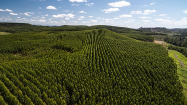 Dia do Meio Ambiente: 5 mitos quando o assunto é papel
